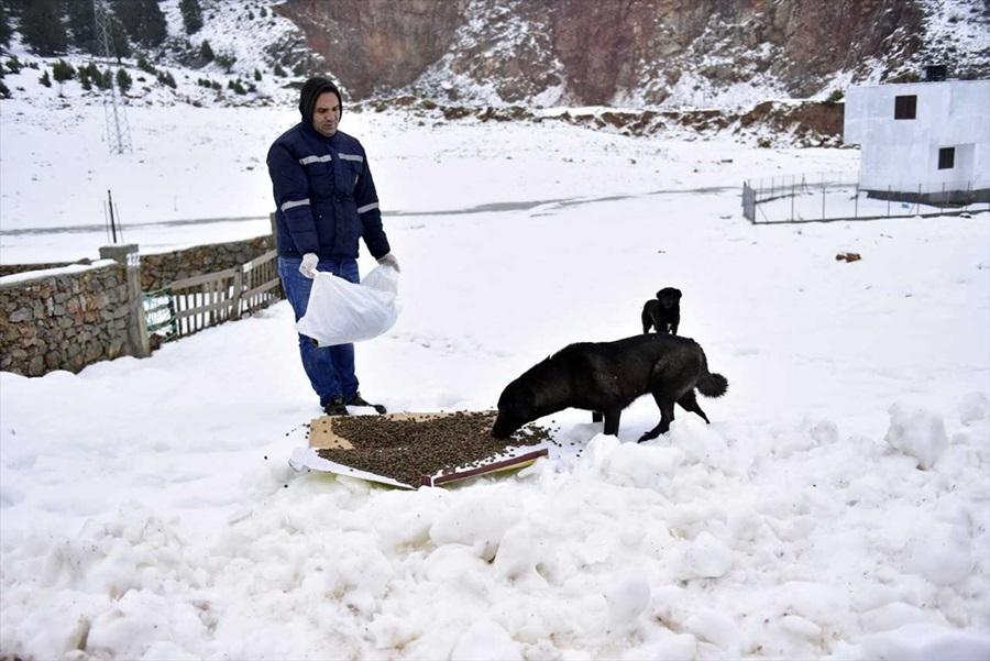 Soğuktan etkilenen hayvanlara yardım eli 1
