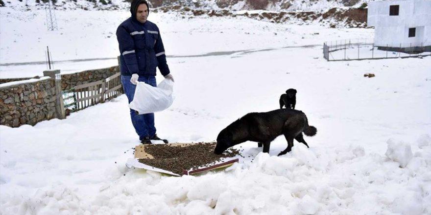 Soğuktan etkilenen hayvanlara yardım eli