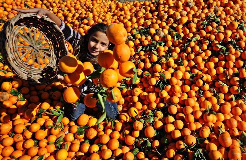 Portakal 1 liradan işlem gördü