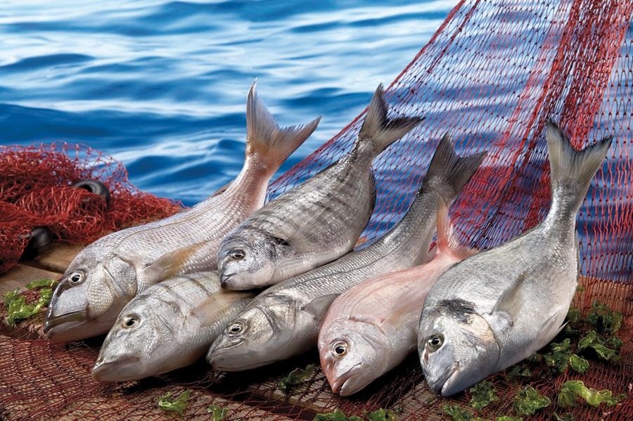 'Türk balığı dünyada aranan balık haline geldi'