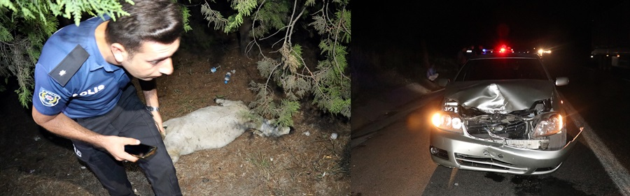Adana'da otomobilin çarptığı koyun telef oldu