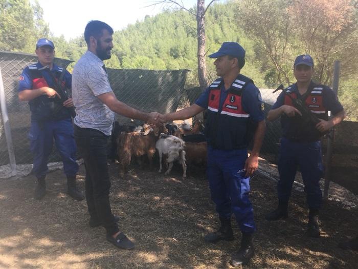 Adana'da küçükbaş hayvan hırsızlığı