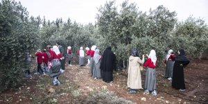 Reyhanlı'daki Suriyeli yetimler için zeytin toplama şenliği